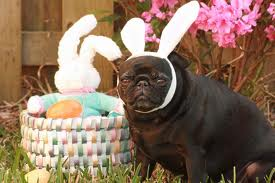 I'm a mixture of a bunny with a pug!!!